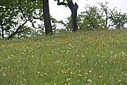 Flachland-Mähwiesen im Teilgebiet Schirnberg