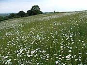 Artenreiche Flachlandmähwiese