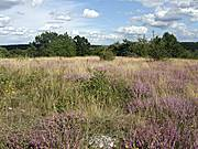 Heide in Teilgebiet 13b