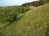 TG 13c Burg FFH-Gebiet Basaltmagerrasen am Rande der Wetterau Trockeninsel (5520-304)