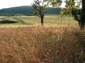 TG 13e Schirnberg FFH-Gebiet Basaltmagerrasen am Rande der Wetterau Trockeninsel (5520-304)