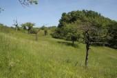 TG 13f Katzenberg FFH-Gebiet Basaltmagerrasen am Rande der Wetterau Trockeninsel (5520-304)