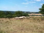 TG 13k Rechelshäuser Köppel FFH-Gebiet Basaltmagerrasen am Rande der Wetterau Trockeninsel (5520-304)