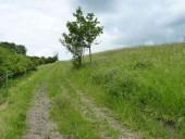TG 13s Am Schloß Leustadt FFH-Gebiet Basaltmagerrasen am Rande der Wetterau Trockeninsel (5520-304)