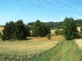 TG 13u Über dem Riedbrunnen FFH-Gebiet Basaltmagerrasen am Rande der Wetterau Trockeninsel (5520-304)