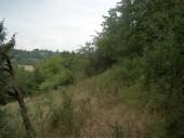 TG 18 FFH-Gebiet Am Faulenberg bei Dauernheim (5619-303)