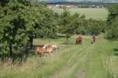 TG 7 FFH-Gebiet Grünland bei Bellersheim und Obbornhofen (5518-304)