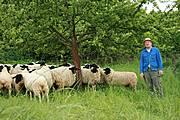 Schäfer Kurt Lind mit seinen Schafen