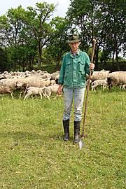 Der Schäfer Peter Link mit seinen Schafen